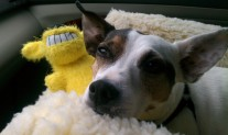 Sparky and his Loofa Dog.