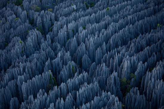 Stone-Forest-in-Madagascar