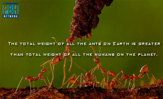 weight-of-ants-on-earth