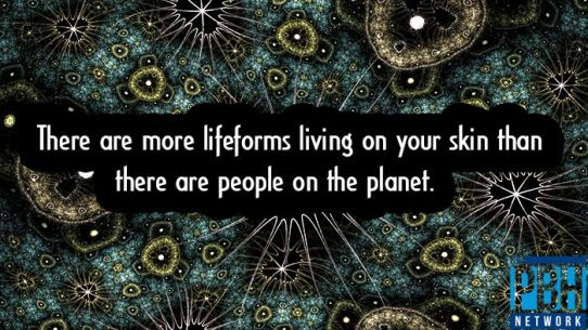 lifeforms-living-on-your-skin
