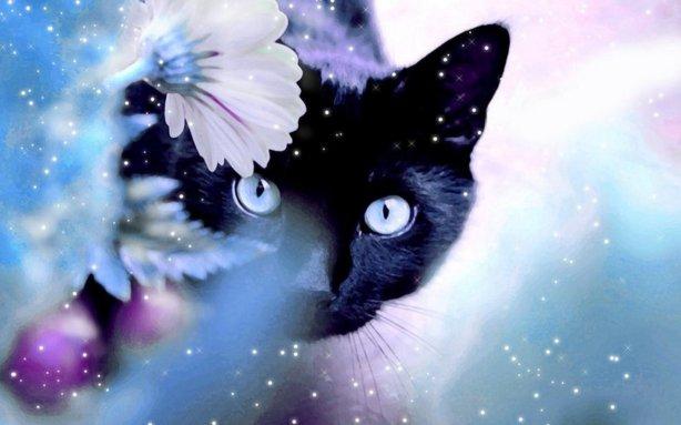 Beautiful-Cat-cats-16095933-1280-800