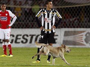soccer-dog-440