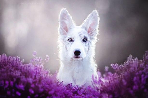 dog-photography-alicja-zmyslowska-2-11-574036e13f03c__880