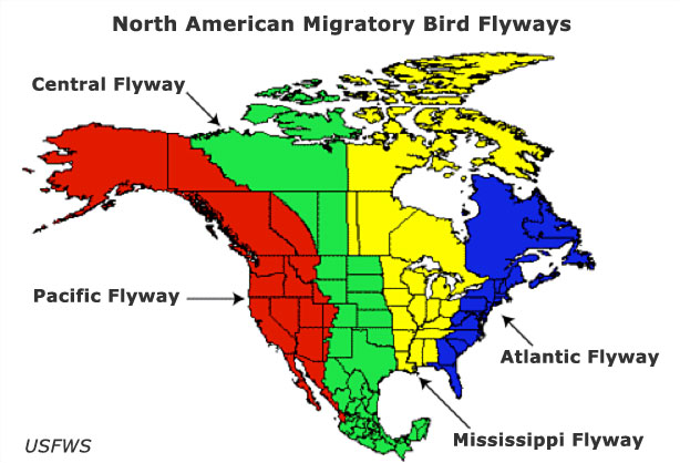 birdflyways