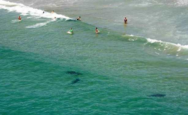 sharks-on-beaches