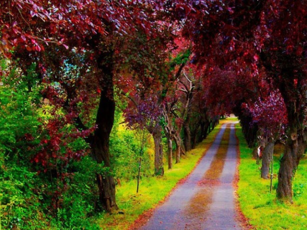 a-beautiful-path-villaviciosa-asturias-spain-700x525