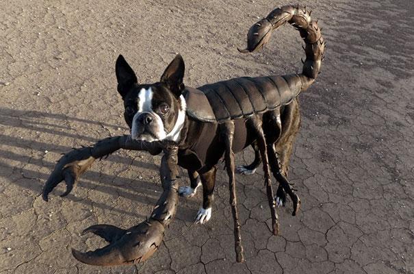 halloween-dog-costumes-16-57fcb669b18e7__605
