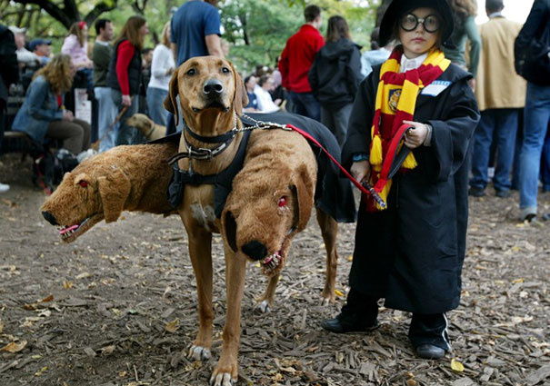 halloween-dog-costumes-2-57fcb649c2eb7__605