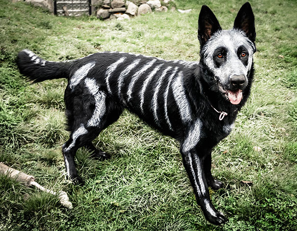 halloween-dog-costumes-22-57fcb679edcf9__605
