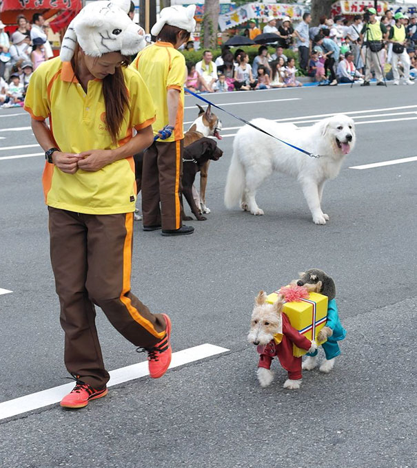 halloween-dog-costumes-42-57fcb6a979803__605