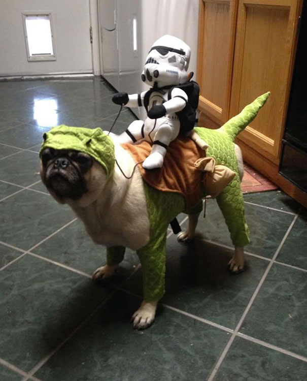 halloween-dog-costumes-64-57fce384eeab6__605
