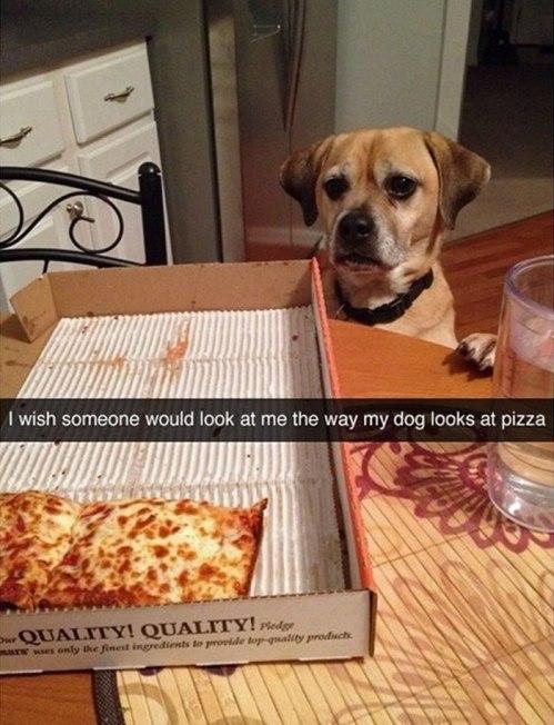funny-dog-snapchats-10-581ae57fa95ff__700