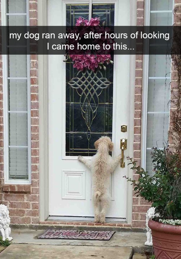 funny-dog-snapchats-3-581ae56acbd02__700
