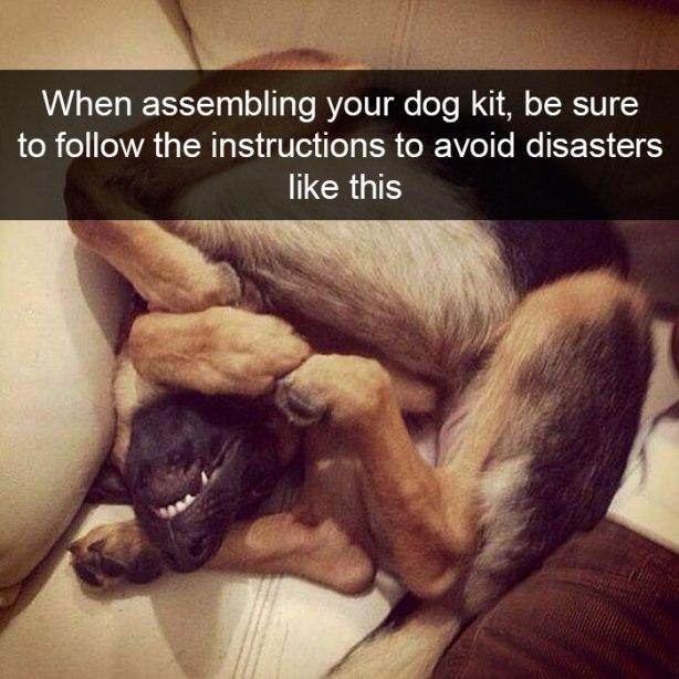 funny-dog-snapchats-7-581ae5774178f__700