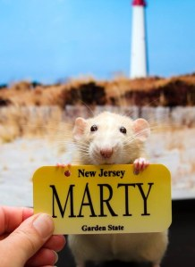 ratname