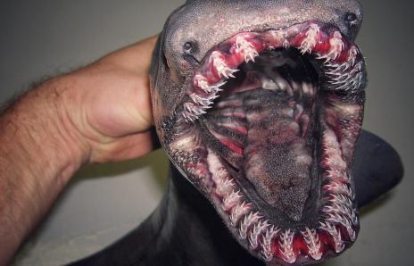 creature2