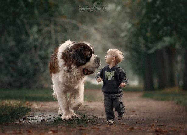 little-kids-big-dogs-friendship-photography-andy-seliverstoff-5-586618202f1d5__880