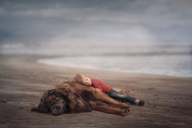 little-kids-big-dogs-friendship-photography-andy-seliverstoff-7-586618239fd3d__880