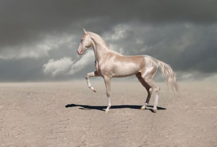 beautiful-horse-shiny-blonde-hair-akhal-teke-4