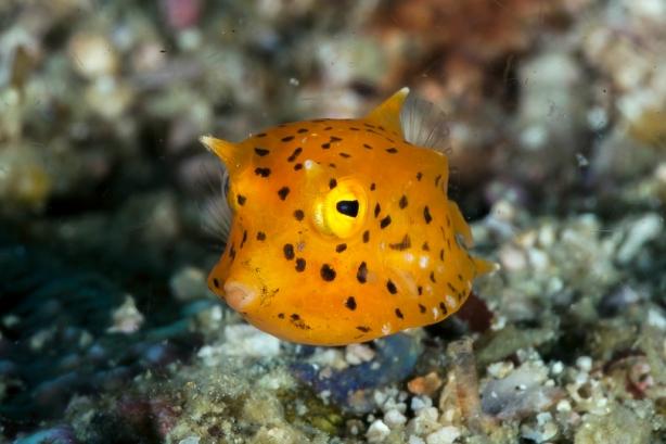 ccowfish2