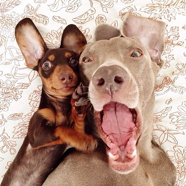 funny-animal-selfies-17-587deb5107a63__605