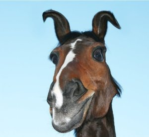 horse-with-surprised-face-funny-picture