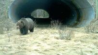 bridges-for-animals-around-the-world-49-58a59e0dc70d4__880