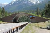 bridges-for-animals-around-the-world-58a473c72eb77__880
