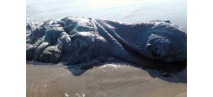 a-mystery-13-foot-blob-washed-up-on-the-shores-of-acapulco-mexico-back-in-2016-scientists-still-have-no-idea-what-it-is-or-was