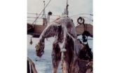 discovered-off-the-coast-of-new-zealand-in-1977-many-believed-the-carcass-belonged-to-a-prehistoric-sea-creature-scientists-later-determined-it-was-a-basking-shark-weighing-in-at-almost-