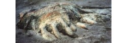 discovered-on-four-mile-beach-in-tanzania-in-1997-the-four-mile-globster-was-over-15-feet-long-and-weighed-approximately-4-tons-it-is-still-unidentified
