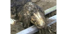 found-by-russian-soldiers-near-the-shore-of-sakhalin-in-2006-the-moscow-monster-has-never-been-formerly-identified