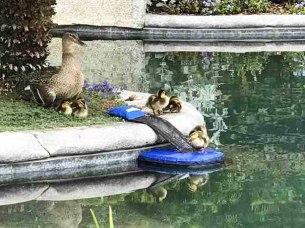 invention-animals-rescue-pool-rich-mason-froglog-8-594cb871c1bb6__605