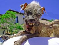 uglydog2