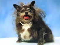 uglydog3