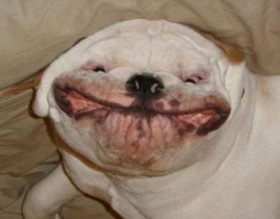 uglydog4