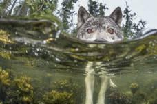 sea-wolf-720
