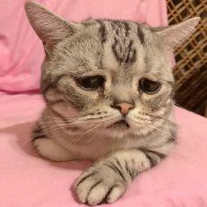 saddest-cat-luhu-maggie-liu-lanlan731-13-59c0cd1f5b4d2__700