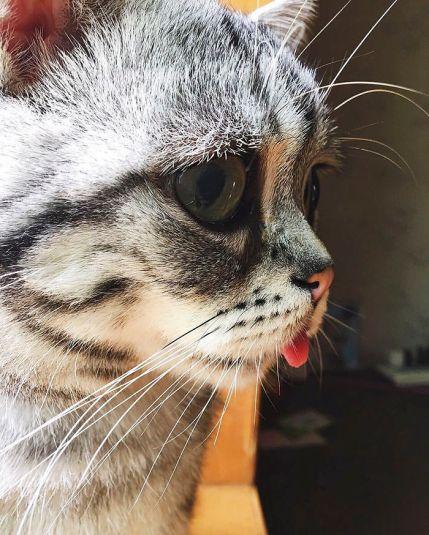 saddest-cat-luhu-maggie-liu-lanlan731-2-59c0bf7577fc0__700