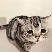 saddest-cat-luhu-maggie-liu-lanlan731-67-59c0c04886d8d__700