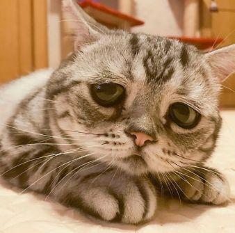 saddest-cat-luhu-maggie-liu-lanlan731-89-59c0c1211f4a0__700