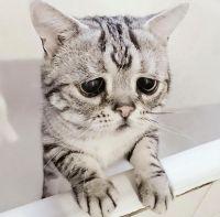 saddest-cat-luhu-maggie-liu-lanlan731-90-59c0c12417dfd__700