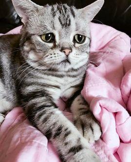 saddest-cat-luhu-maggie-liu-lanlan731-98-59c0c13888db4__700