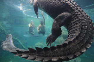 croc8