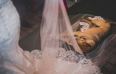 stray-dog-crash-wedding-matheus-marilia-pieroni-8-1