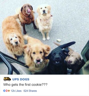 ups-dogs-facebook-group-drivers-meet-routes-sean-mccarren-01