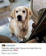 ups-dogs-facebook-group-drivers-meet-routes-sean-mccarren-010