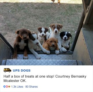 ups-dogs-facebook-group-drivers-meet-routes-sean-mccarren-011