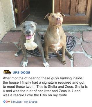 ups-dogs-facebook-group-drivers-meet-routes-sean-mccarren-014