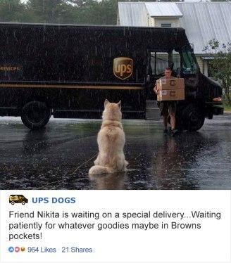 ups-dogs-facebook-group-drivers-meet-routes-sean-mccarren-02a